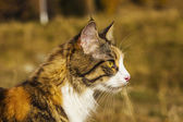 Cat in the nature looking aside — Стоковое фото
