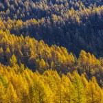 Treescape in Aosta Valley 14 — Stock Photo #57497093