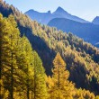 Treescape in Aosta Valley 15 — Stock Photo #57497307