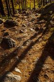 Tree shadows in Aosta Valley autumn landscape — Stock Photo