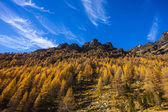 Treescape in Aosta Valley 2 — Stock Photo
