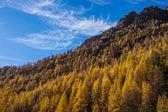 Treescape in Aosta Valley 3 — Stock Photo