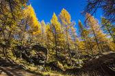 Treescape in Aosta Valley 4 — Stock Photo