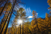 Treescape in Aosta Valley 6 — Stock Photo