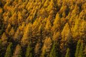 Treescape in Aosta Valley 7 — Stock Photo