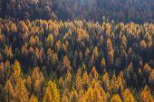 Treescape in Aosta Valley 10 — Stock Photo