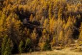 Treescape in Aosta Valley 9 — Stock Photo