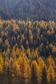 Treescape in Aosta Valley 11 — Stock Photo