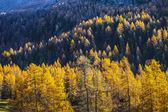 Treescape in Aosta Valley 12 — Foto de Stock