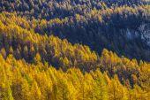Treescape in Aosta Valley 14 — Stock Photo