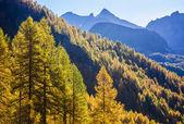 Treescape in Aosta Valley 15 — Stock Photo