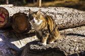 Cat sitting on a trunk — Foto de Stock