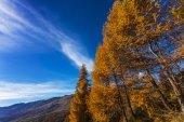 Autumn landscape in Aosta Valley 16 — Stock Photo