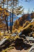 Autumn landscape in Aosta Valley — Stock Photo