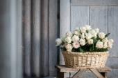 Schoonheid van rozen — Stockfoto
