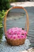 Skönhet rosor — Stockfoto