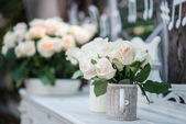 Beauty of roses — Stock Photo