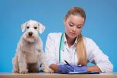 Cute little dog visits vet — Foto de Stock