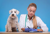 Cute little dog visits vet — Stock Photo