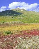 Alpine tundra in Autumn colors — Zdjęcie stockowe