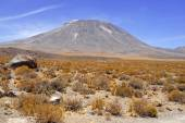 Atacama Desert and Altiplano, Chile — Stock Photo