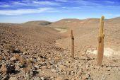 Atacama Desert and Altiplano, Chile — Stock Photo