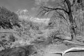 Black and white landscape of Zion National Park — Stock Photo