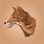Brown dog head vector — Stock Vector