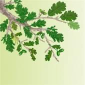 Oak branch spring background vector — Stock Vector