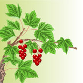 Twig with red currant  vector — Stock Vector
