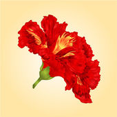 Tropical flowers red  hibiscus vector — Stock Vector