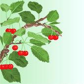 Cherry old branch vector — Stock Vector