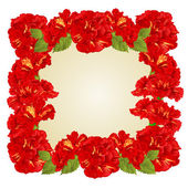 Frame of red hibiscus and leaves vector — Stock Vector