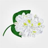 White rhododendron twig vector — Stock Vector