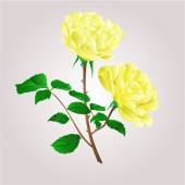 Twig yellow roses vector — Stock Vector