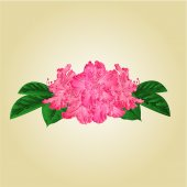 Bouquet of pink rhododendrons vector — Stock Vector