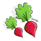 Turnip Illustration — Stock Vector