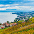 Beautiful view on Lavaux vineyards and the lake Geneva, Vaud, Switzerland, autumn — Stock Photo #64930485
