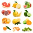 Different citruses — Stock Photo #53092213