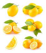 6 lemon images — Stock Photo