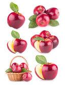 Set of 6 green apples — Stock Photo