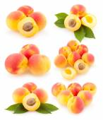Collection of apricots — Stock Photo