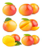 Set of 6 mango images — Stockfoto