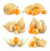 Set of 6 physalis — Stock Photo