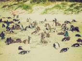 Retro look Cape Town penguins — Stock Photo