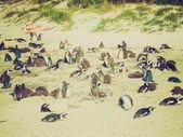 Retro look Cape Town penguins — Stock Photo