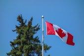 Bandera de canadá — Foto de Stock
