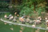 Flamingo bird in a pond — Stock Photo