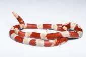 Reptiles on white background — Stock Photo