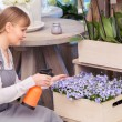 Florist spraying water onto a floral arrangement — ストック写真 #68191059